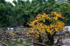Bonsai garden Stock Image