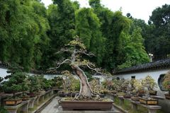 Bonsai garden Royalty Free Stock Photos