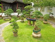 Bonsai Garden Royalty Free Stock Photography