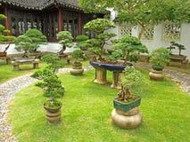 Bonsai Garden Royalty Free Stock Photography