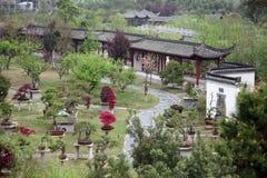 Bonsai Garden Stock Photography