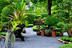Bonsai garden. In botanical park Stock Photos