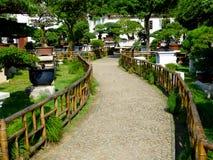 Bonsai Garden Royalty Free Stock Photo