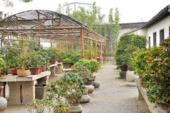 Bonsai Garden in Humble Administrator's Garden Royalty Free Stock Image