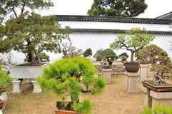 Bonsai Garden in Humble Administrator's Garden Stock Image
