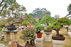 Bonsai Garden in Humble Administrator's Garden Stock Images