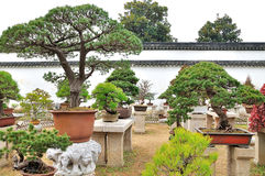 Bonsai Garden in Humble Administrator's Garden Stock Photo
