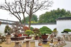 Bonsai Garden in Humble Administrator's Garden Royalty Free Stock Photography