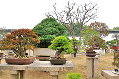 Bonsai Garden in Humble Administrator's Garden Royalty Free Stock Photos