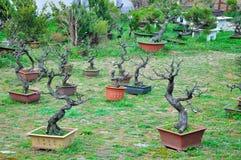 Bonsai Garden Royalty Free Stock Images