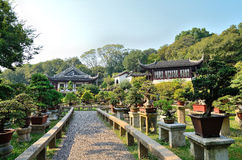 Bonsai Garden. In SuZhou Tiger Hill,China.Bonsai is the art of one of the fine tradition of the Chinese nation. It plants, rocks, soil, water, etc. as the Royalty Free Stock Images