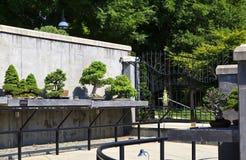 Bonsai Garden Trees at North Carolina Garden Asheville. A display of bonsai trees at the garden in Asheville, NC stock photo