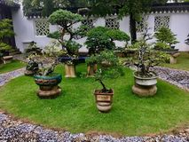 Bonsai-Garten Lizenzfreies Stockbild
