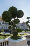 Bonsai, grande palazzo, Tailandia, Bangkok fotografie stock