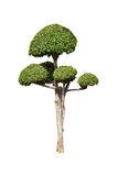 Bonsai green trees isolated on white background Royalty Free Stock Photography