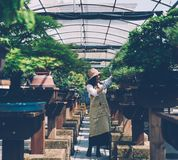 Bonsai greenhouse center. rows with small trees stock images