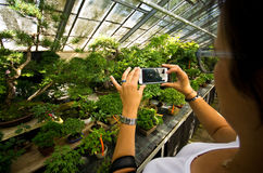 Bonsai greenhouse in Walbrzych, Poland. Woman taking mobile photos of bonsai trees at Palmiarnia (Palm Greenhouse) in Walbrzych, Poland Stock Photo