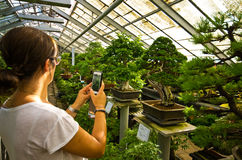 Bonsai greenhouse in Walbrzych, Poland. Woman taking mobile photos of bonsai trees at Palmiarnia (Palm Greenhouse) in Walbrzych, Poland Royalty Free Stock Photos