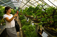Bonsai greenhouse in Walbrzych, Poland. Woman taking mobile photos of bonsai trees at Palmiarnia (Palm Greenhouse) in Walbrzych, Poland Stock Photography