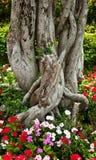 Bonsai in het park Royalty-vrije Stock Foto's