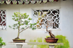 Bonsai in Humble Administrator's Garden Stock Photography