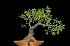 Bonsai isolated on black background. stock photo