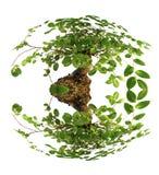 Bonsai Isolated On White Stock Images
