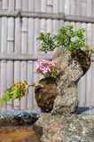 Bonsai in the Japanese garden royalty free stock photo