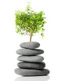 bonsai japończyk Obraz Royalty Free