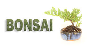 Bonsai Letters with Potted Tree Banner Stock Image