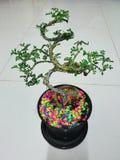 Bonsai med färgglade stenar Arkivfoton