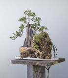 Bonsai Mini Mountains royalty free stock photography