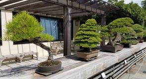 Bonsai miniature trees Royalty Free Stock Photos