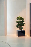 Bonsai in the modern interior Royalty Free Stock Photos