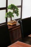 Bonsai na nadokiennym parapecie obrazy royalty free
