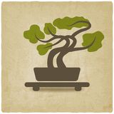 Bonsai old background Royalty Free Stock Images