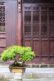Bonsai and old door stock images