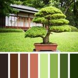 Bonsai palette Stock Photos