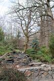 bonsai in the park