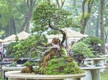 Bonsai and Penjing Stock Image