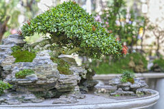 Bonsai and Penjing Stock Images