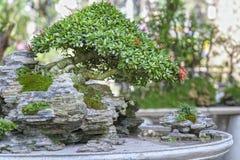 Bonsai and Penjing Stock Images