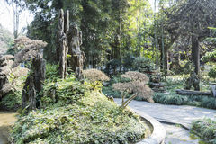 Bonsai royalty free stock photography