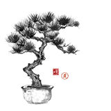 Bonsai pine tree hand hand-drawn with ink Royalty Free Stock Image