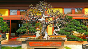 Bonsai plant Stock Images