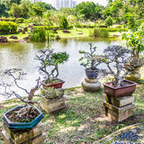Bonsai plant display. Bonsai plants in the Chinese Gardens, Singapore Royalty Free Stock Photography