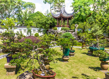 Bonsai plant display Singapore Royalty Free Stock Image