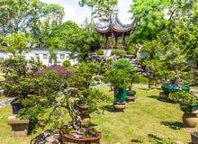 Bonsai plant display Singapore. Bonsai plant display in the Chinese Gardens, Singapore Royalty Free Stock Image