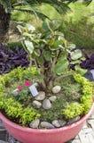Bonsai plant Royalty Free Stock Images