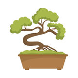 Bonsai plant  icon. Japan culture. Vector graphic Royalty Free Stock Images